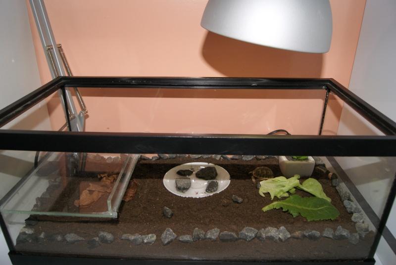 Terrarium bébé tortue Dsc01616