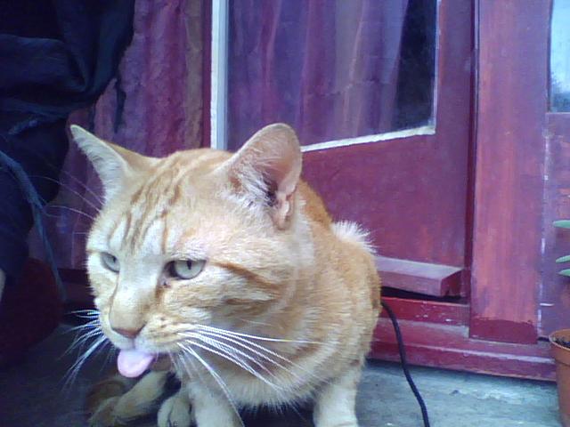Perdu chat roux sur le Campus de Beaulieu (Mai 2013) - Page 2 Image_12