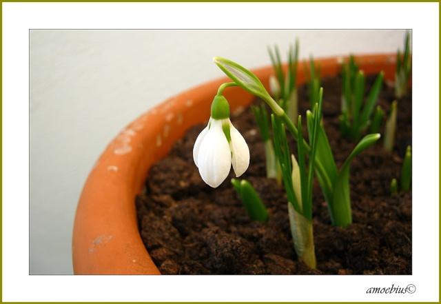 Erste Frühlingsboten im Garten und in Wald und Flur - Seite 3 Img_2913