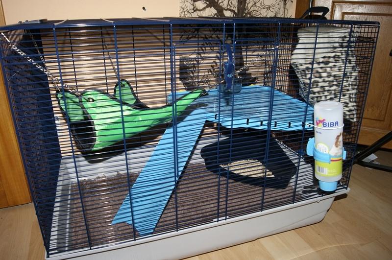 [Dijon] Vens cage Freddy 2 _dsc5910