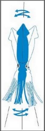Annonce Squid Bulawayo Yo-Zuri Squid11