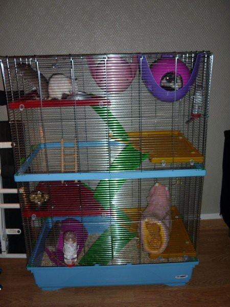 CAGE IMAC RAT 80 DOUBLE à vendre (NORD) Cage_i10