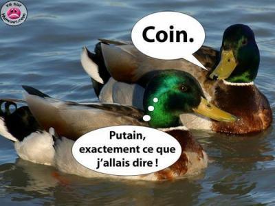 Un canard dans la place :) 62084010