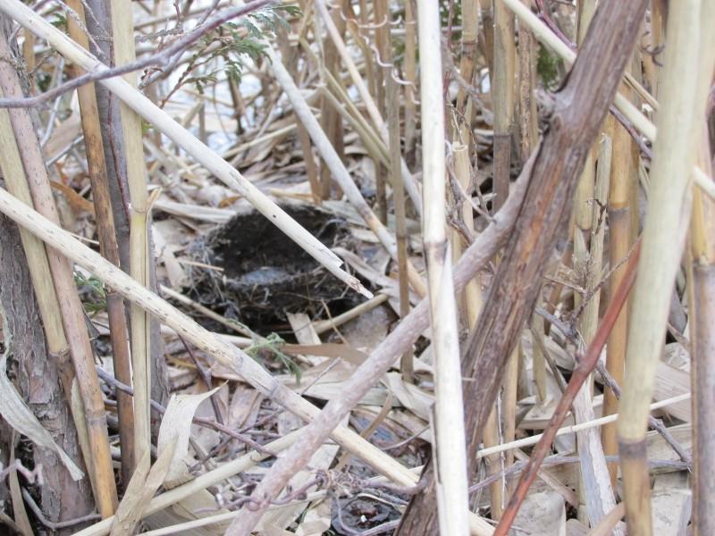 À qui appartiennent ces nids? Img_0720