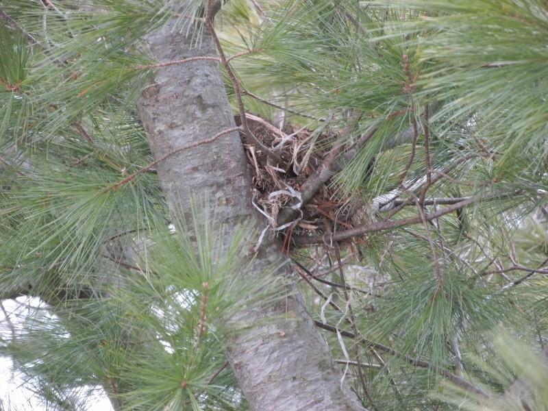 À qui appartiennent ces nids? Img_0722