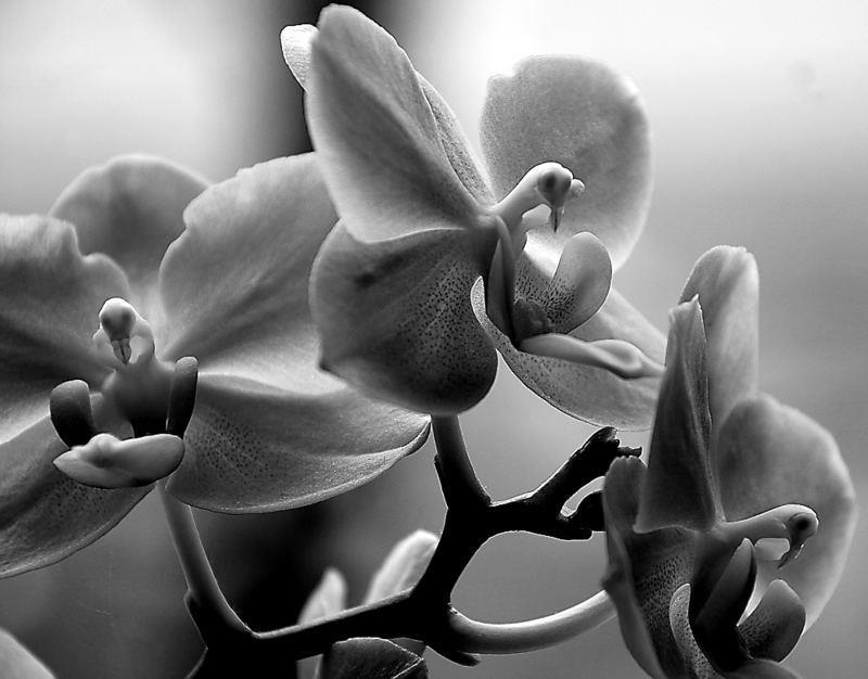 photos en noir et blanc - Page 9 22259410