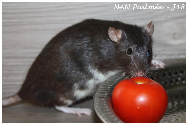 ♥ NAN Padmée ♥♥ TIA Gandhi ♥  RP (95,60,78) Padmae11