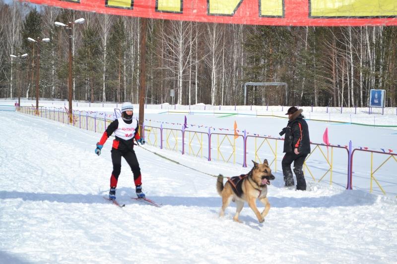 8 марта 2013 года г. Томск Кубок России по зимним видам кинологического спорта Dsc_0015