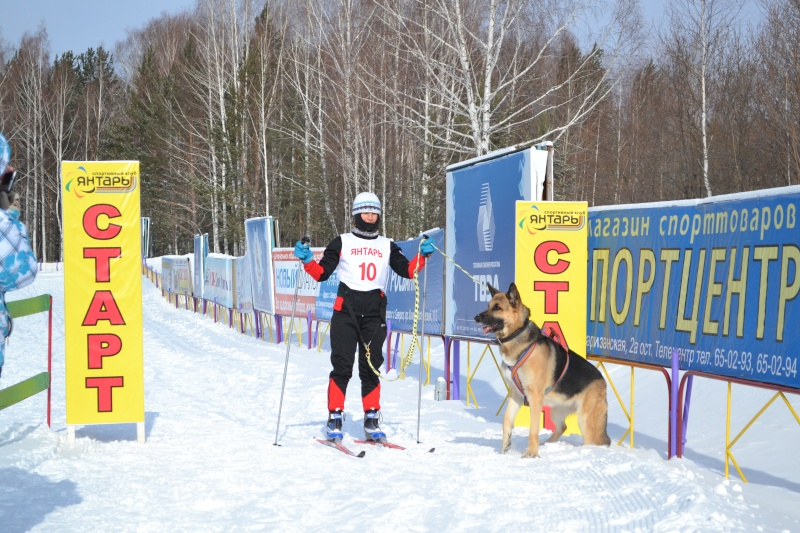 8 марта 2013 года г. Томск Кубок России по зимним видам кинологического спорта Dsc_0016