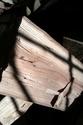 carpino bianco Imag0714