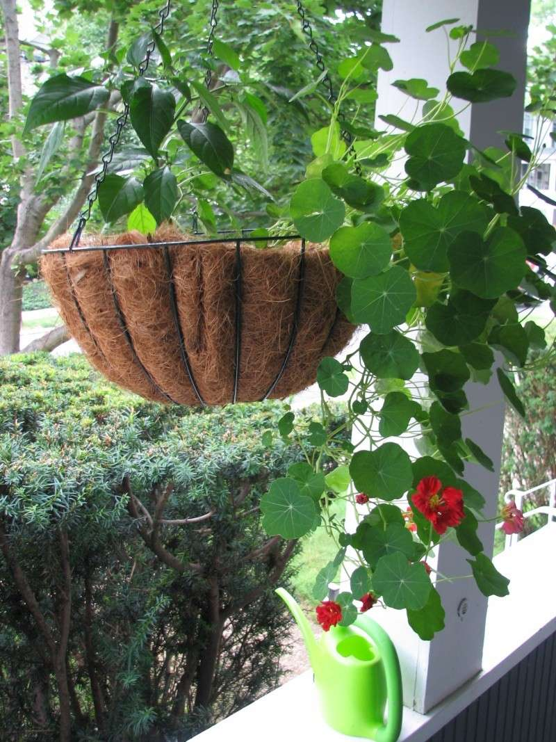 hanging baskets with Mel's Mix Nastur11