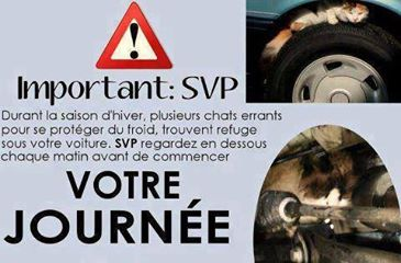 Topic des chats - Page 3 11861510