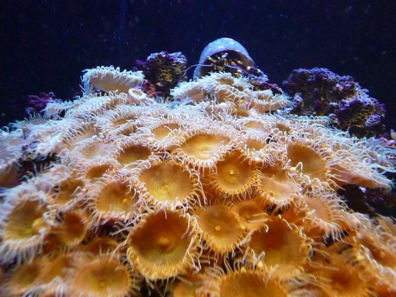 """Nano - aquatlantis 75L """"chmil59"""" P1000516"""