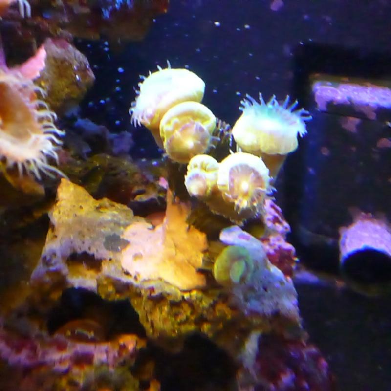 """Nano - aquatlantis 75L """"chmil59"""" P1000610"""