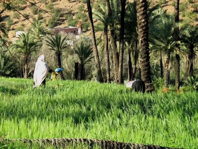 Qui a dit que Tamazighte la Marocaine n'est pas heureuse ? Mimoun15