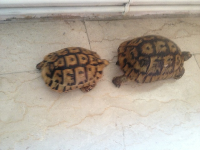CONFIRMATION TYPE DE MES TORTUES Img_2410