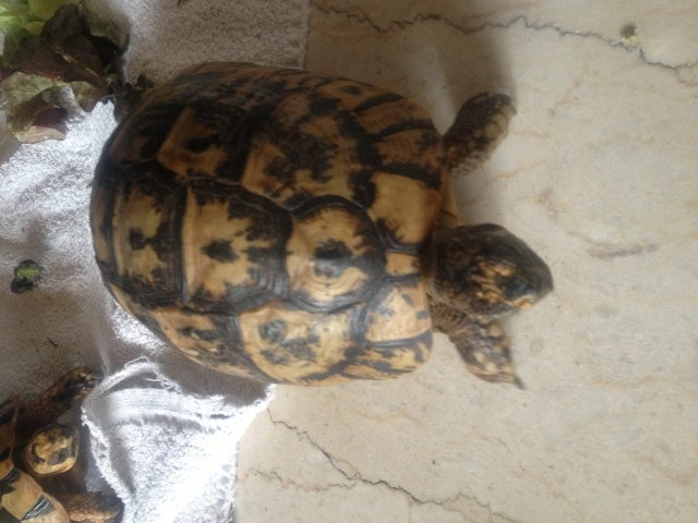 CONFIRMATION TYPE DE MES TORTUES Img_2612