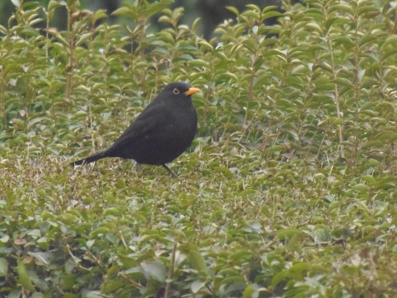 Photographies d'oiseaux en tout genres. P3250015