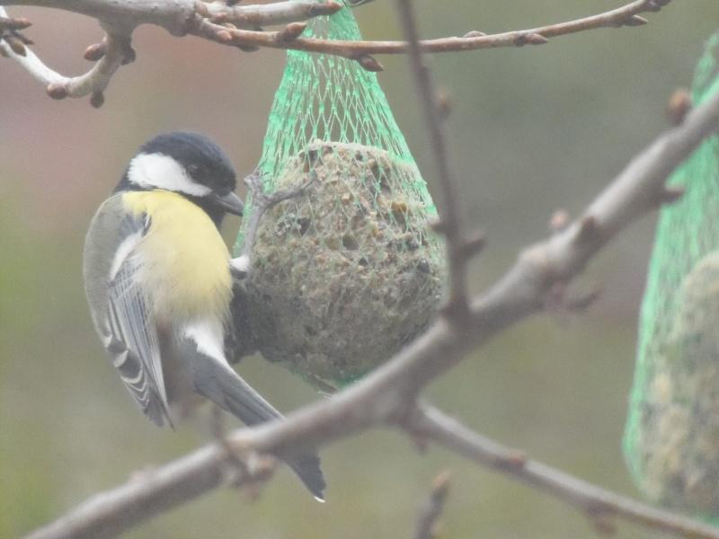 Photographies d'oiseaux en tout genres. P3250016