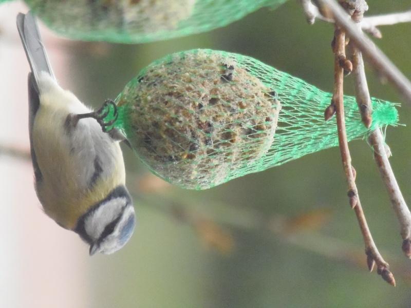 Photographies d'oiseaux en tout genres. P3250017