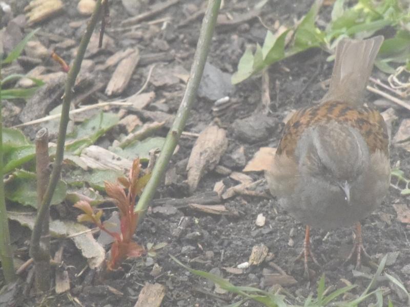 Photographies d'oiseaux en tout genres. P3250018