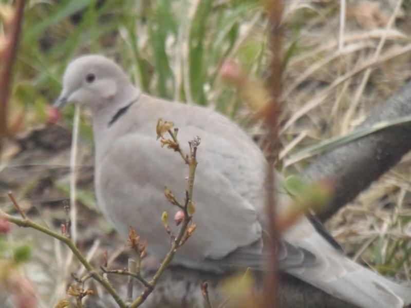 Photographies d'oiseaux en tout genres. P3250019
