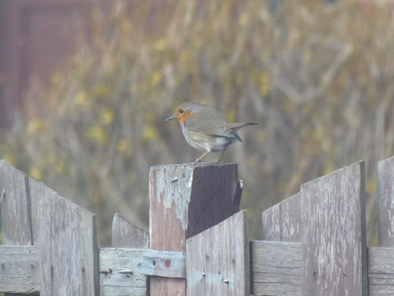 Photographies d'oiseaux en tout genres. P4070010