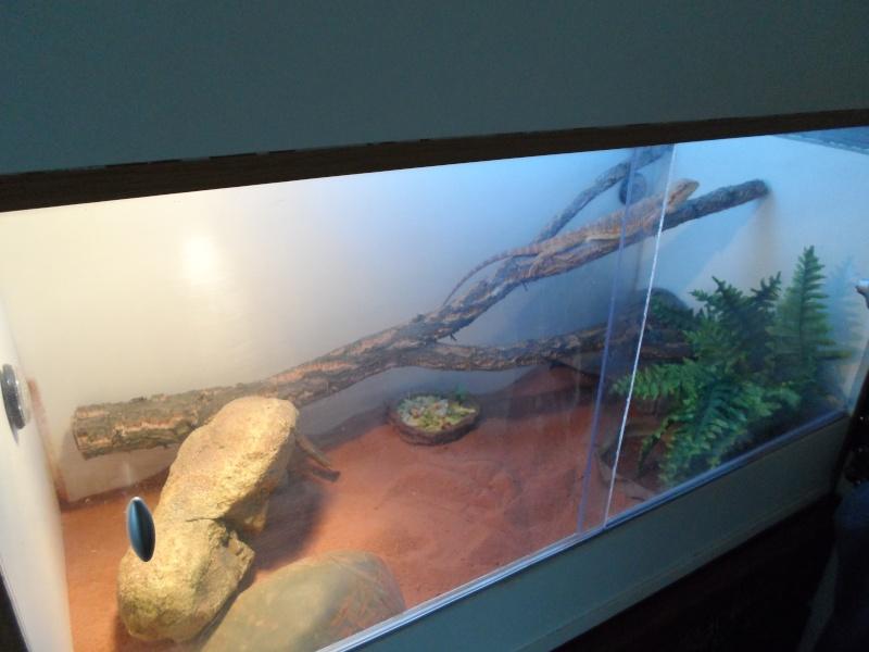 presentation de mon terrarium provisoire Sam_0114
