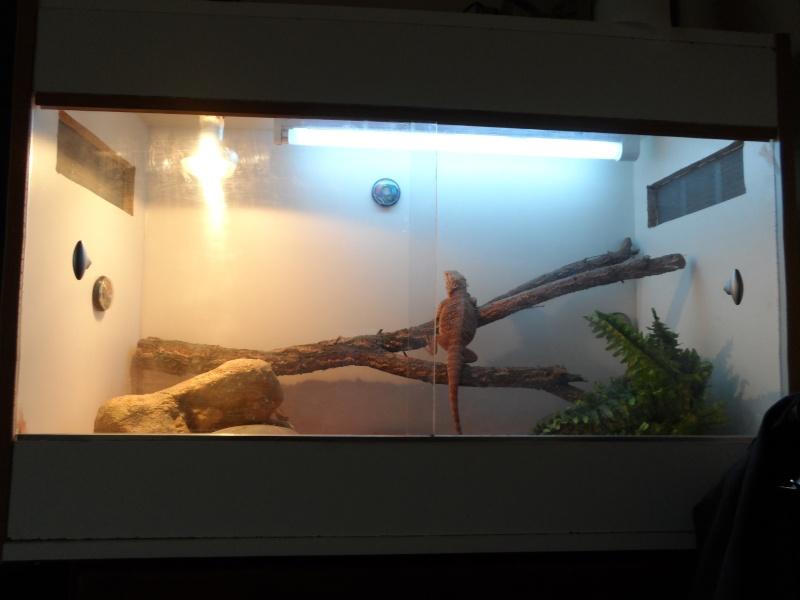 presentation de mon terrarium provisoire Sam_0115