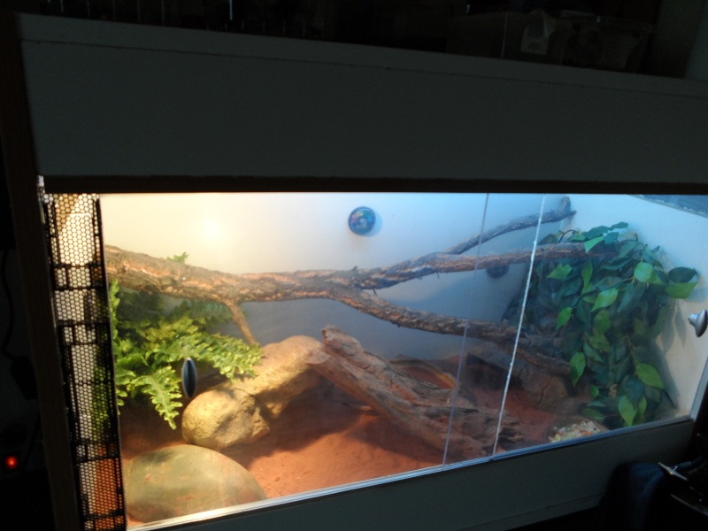 presentation de mon terrarium provisoire Sam_0118