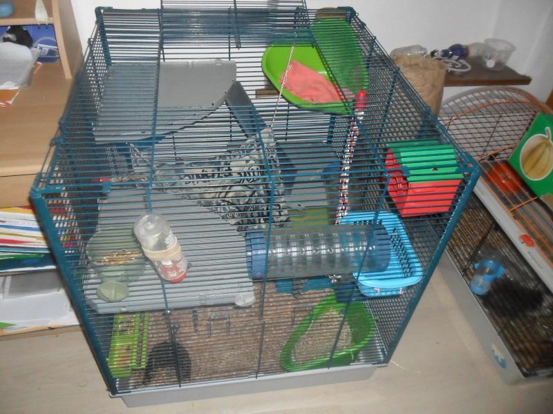 Photos de vos cages - Page 37 Sam_2412