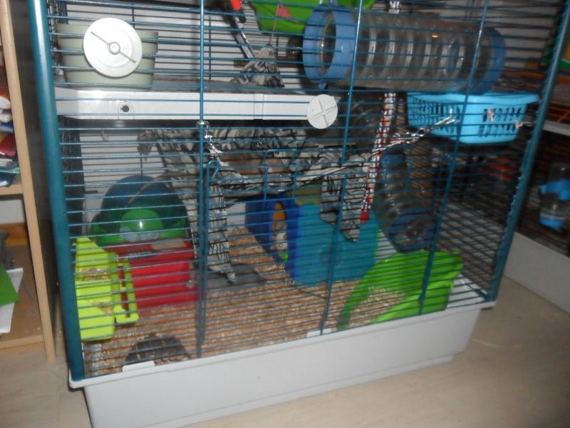 Photos de vos cages - Page 37 Sam_2413
