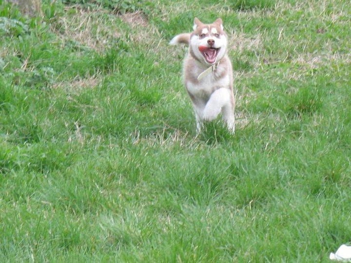 2 year old needs training ! Help ! 21566010