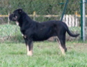 Nationale d'Elevage Nevers 2013 Chiens11