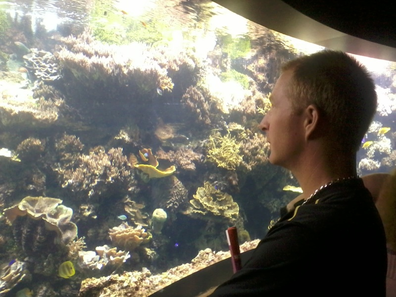 OCEANOPOLYS Bon anniversaire mon aqua85 2013-012