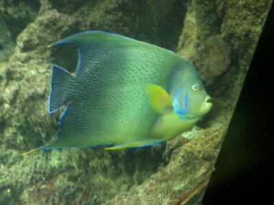OCEANOPOLYS Bon anniversaire mon aqua85 2013-014