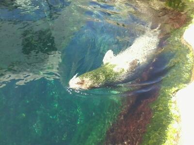 OCEANOPOLYS Bon anniversaire mon aqua85 2013-015