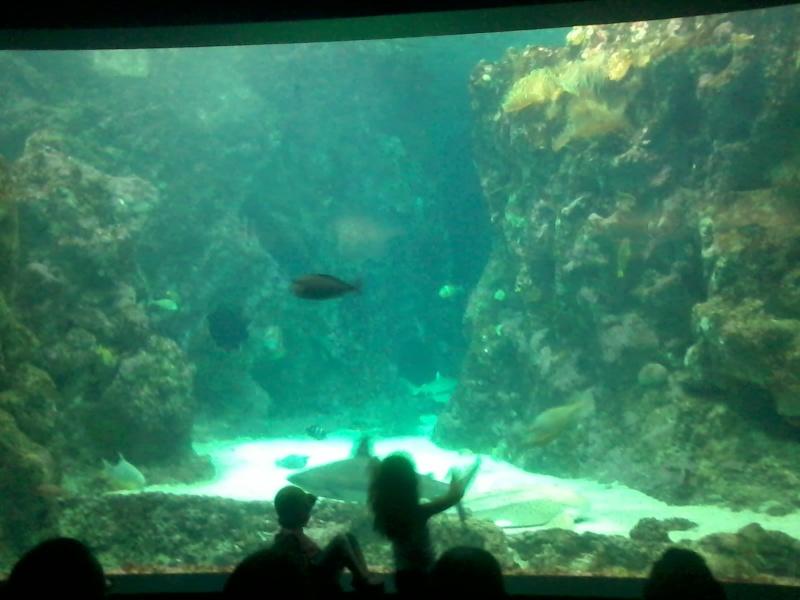 OCEANOPOLYS Bon anniversaire mon aqua85 2013-016