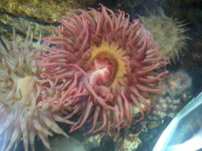 OCEANOPOLYS Bon anniversaire mon aqua85 2013-020