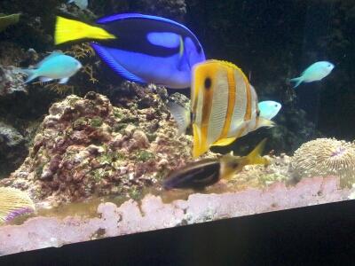 OCEANOPOLYS Bon anniversaire mon aqua85 2013-024
