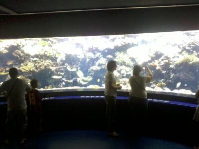 OCEANOPOLYS Bon anniversaire mon aqua85 2013-026