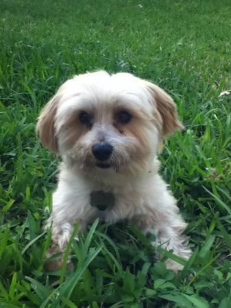 LOST DOG (HAMMOCKS KENDALL)  Luckyd10