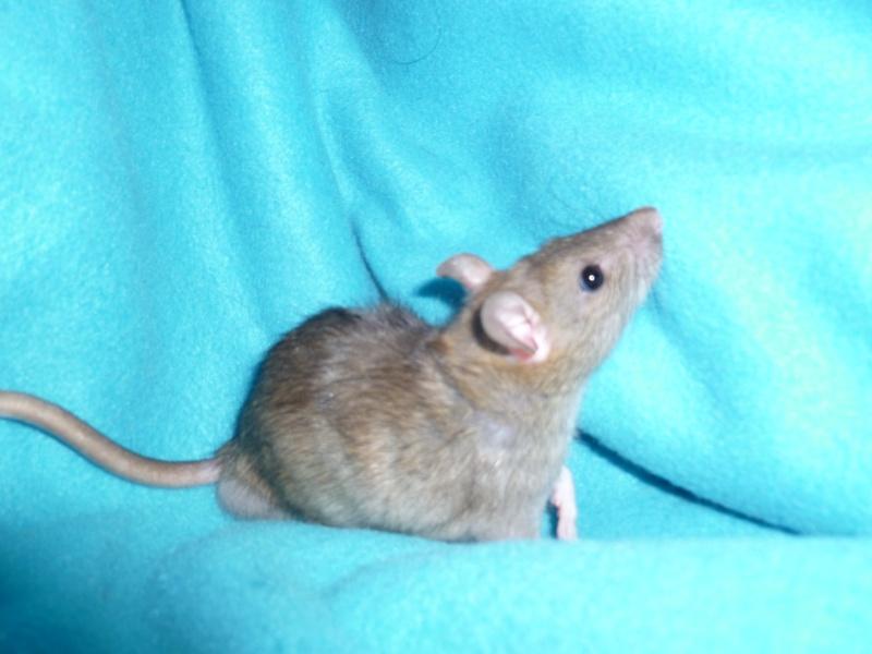 13 petit rats en Bretagne  - Page 2 P1010411