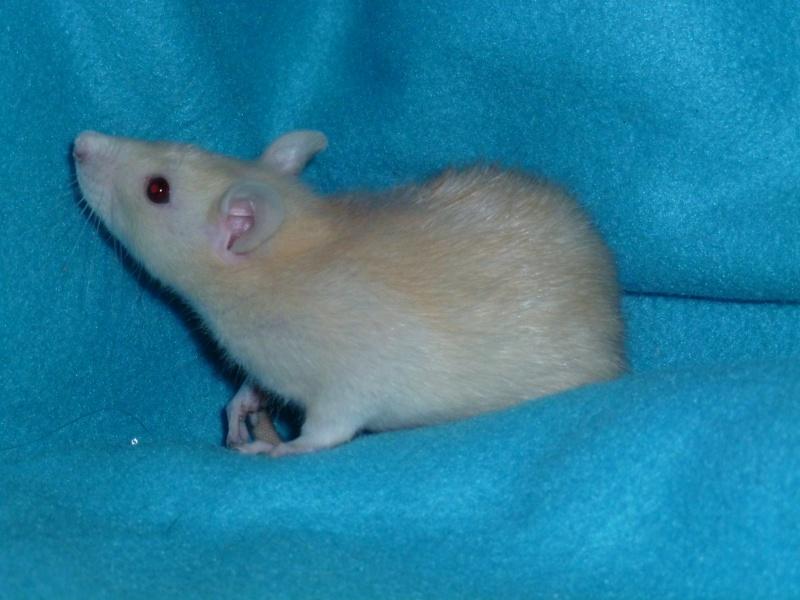 13 petit rats en Bretagne  - Page 2 P1010413