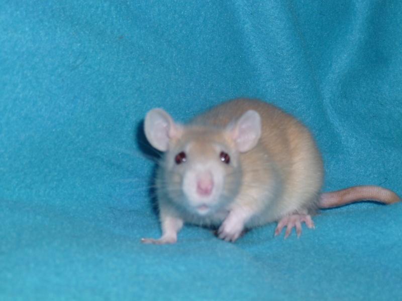 13 petit rats en Bretagne  - Page 2 P1010414