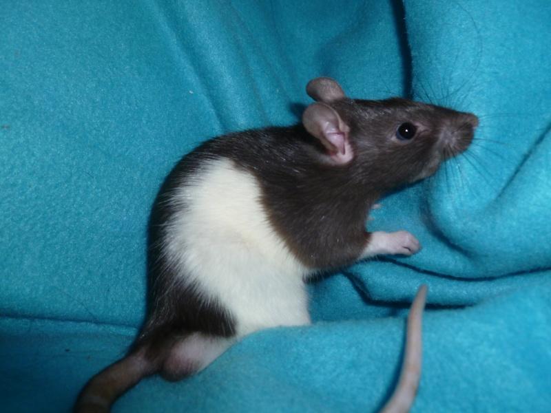 13 petit rats en Bretagne  - Page 2 P1010510