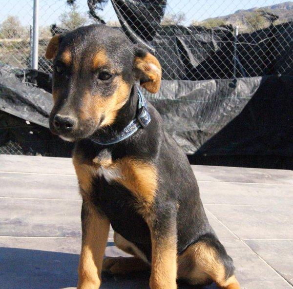 Armani aus Spanien jetzt Ben. Hund10