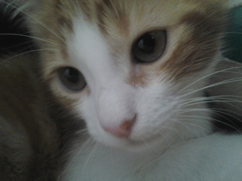 Voici Fifi !! 2013-014