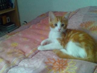 Voici Fifi !! Image510