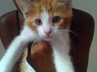 Voici Fifi !! Image514